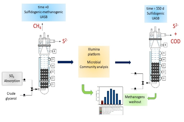 New Publication- Microbial Diversity Dynamics in a methanogenic-Sulfidogenic UASB Reactor